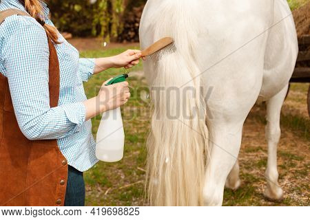 A Young Beautiful Woman Combs The Mane And Tail Of A Horse With A Wooden Comb. Spray For Hair Care.