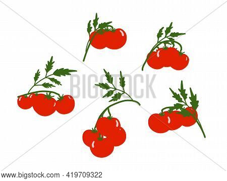 Tomato Background. Set On The Theme Of Vegetables. Red Tomatoes On A White Background. Kitchen Texti