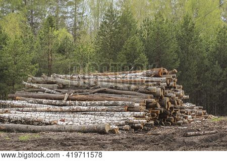 Stacked Logs At Logging In The Forest