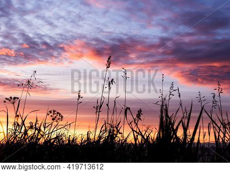 Silhouette Of Grass Flower On Sunset Or Sunrise Background. Naturel Outdoors Background With Seleciv