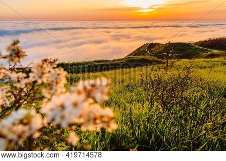 Creeping Fog, Blooming Tree And Mountains. Foggy Weather With Sunset