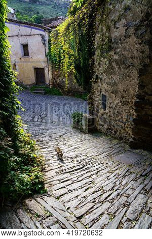 Stray Cat Walking Down The Narrow Cobbled Alley Of An Old Town. Patones De Arriba Madrid. Spain.