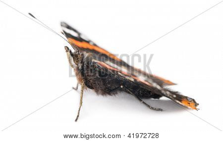 Red Admiral butterfly, Vanessa atalanta, against white background