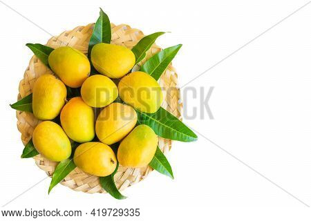 Mangoes Of Alphonso Cultivar Fully Ripen With Yellow Orange Colors Placed On The Wooden Bamboo Weave