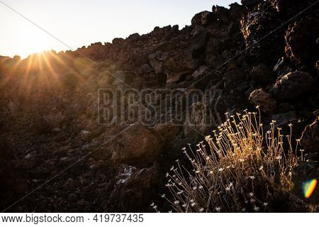 Colorful scenic landscape in Tenerife national park of Teide