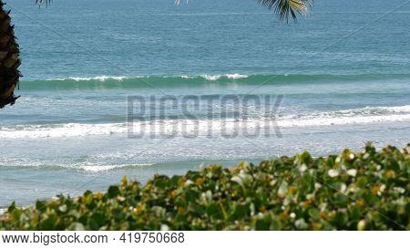 Pacific Ocean Tide, California Tropical Beach Resort Vibes, Usa. Sea Waves Foam, Green Exotic Palm T