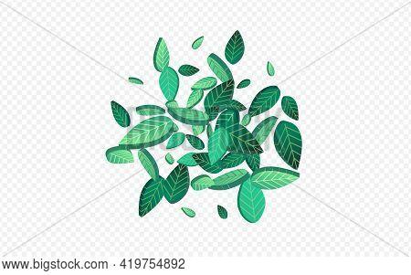 Forest Foliage Fresh Vector Transparent