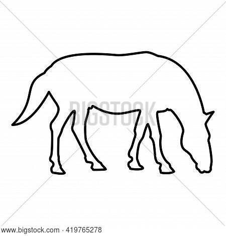 Steed Horse Equestrian Equine Stallion Thoroughbred Mustang Contour Outline Black Color Vector Illus