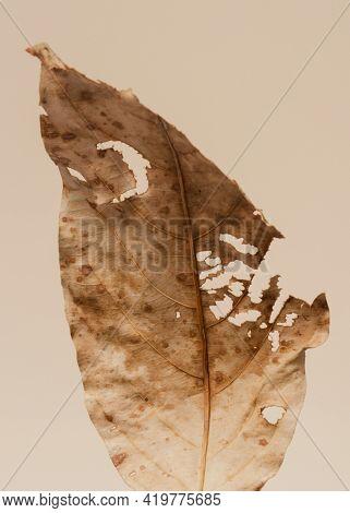Decomposed dried brown leaf macro shot