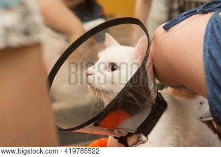Beautiful Cat In A Beauty Salon. Grooming Animals, Washing A Bathing Cat, Combing Hair, Blow-drying.