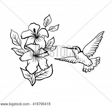 Hummingbird In Flight. Hummingbird Flies Up To The Hibiscus Flowers. Vector Illustration In Outline