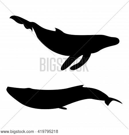 Vector Silhouette Of A Whale. Blue Whale, Killer Whale. Underwater World. Drawing Of A Swimming Whal
