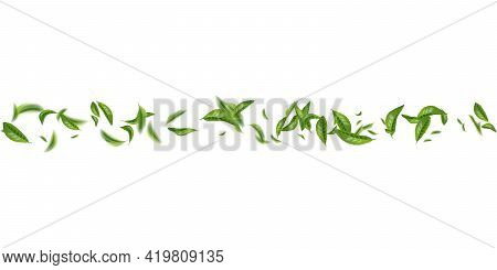 Realistic Beautiful Flying Green Tea Leaf Isolated On White. Leaves Spring Background. The Premium G
