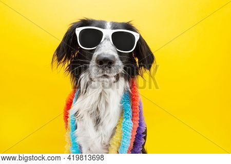 Funny Dog Summer Wearing Sunglasses And Colorful Hawaiian Garlands. Making A Funny Face. Isolated On