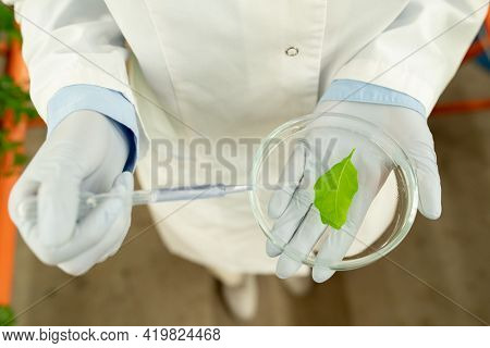 Above view of unrecognizable biologist in latex gloves holding petri dish and dropping reagent on leaf