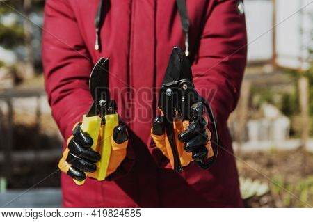 A Man Holds Two Secateurs Of Different Kinds. The Concept Is The Choice Of Tool For Pruning Shrubs