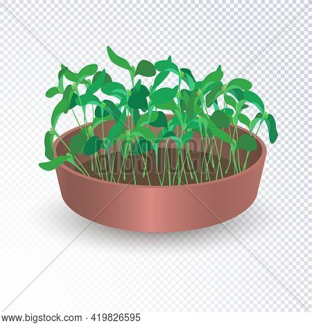 Growing Fresh Young Shoots Of Plants From Seeds In A Pot With Soil. Young Leaves Seedlings Sunflower