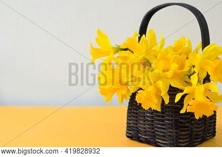 Basket With A Bouquet Of Yellow Fragrant Daffodils On A Gray-yellow Background, Close-up, Space For