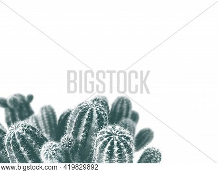 Close-up Of Cacti In A Home Environment, Isolated On A White Background, With Free Space For Text, W