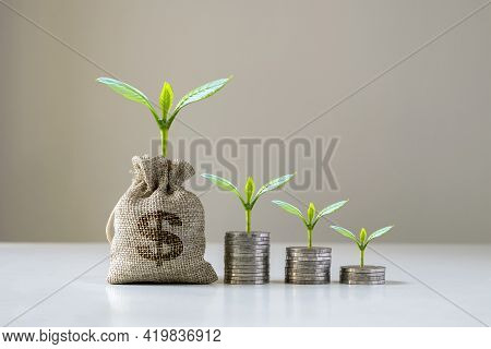 Trees Are Growing From Money Bags And Trees Growing On A Pile Of Money, Financial Ideas And Economic