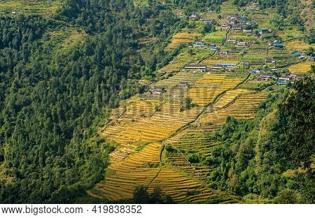 View Of The Rice Field Terraces In Chomrong Village In Annapurna Sanctuary, Nepal. Chomrong Is In Th