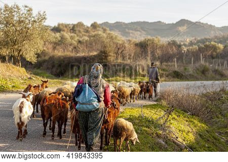 Two Villagers Are Bringing The Herd Back From Grazing At The End Of The Day. A Rural Area In Western