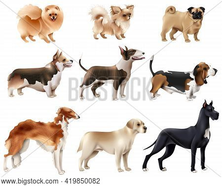 Colored And Isolated Dog Breeds Icon Set With Different Sizes And Breeds Of Dogs Vector Illustration