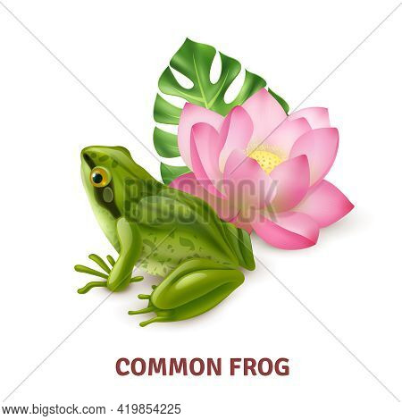 Adult Common Frog Semi Aquatic Amphibia Realistic Closeup Side View Image With Water Lily Background