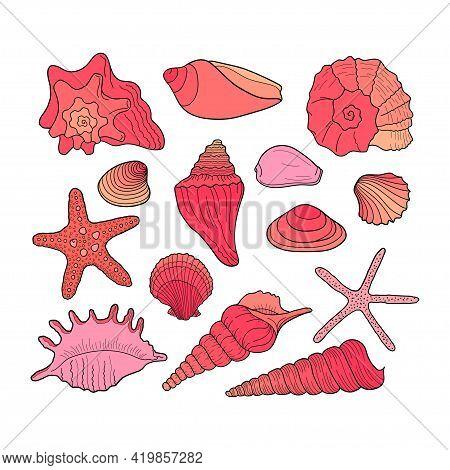 Set Of Seashells. Collection Of Seashells Of Various Shapes. Marine Set. Hand Drawn Vector Colorful