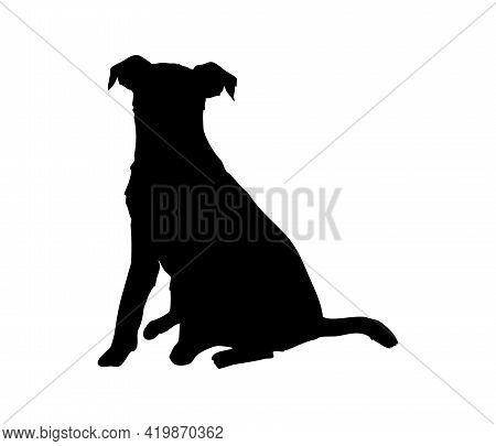 Cute Jack Russell Terrier Silhouette. A Hunting Dog. Sit And Look Ahead.