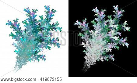 Abstract Frozen Coniferous Twigs In Bouquets On White And Black Backgrounds. Set Of Abstract Fractal