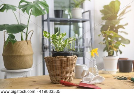 View Of Indoor Garden In Modern House, Home Gardening And Hobby Concept.