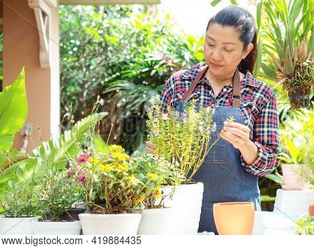 Asian Florist Woman Plant And Sale Online Plant Flower In Garden. People Hobby And Freelance Gardeni