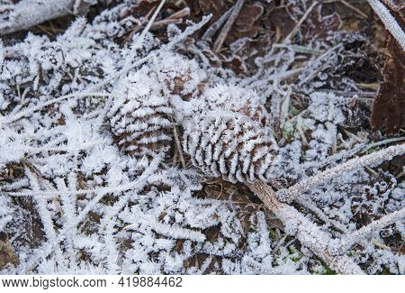 Closeup Detail Of Frozen Frost Covered Pine Cone On Ground Of Forest Woodland Floor In Winter With I