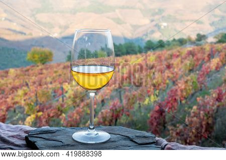 Glass Of Portuguese White Dry Wine, Produced In Douro Valley And Old Terraced Vineyards On Backgroun