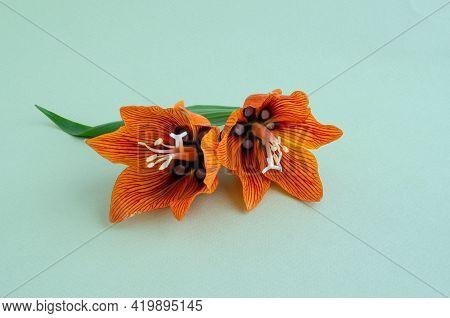 Two Unusual Flowers Not Like Everyone Else