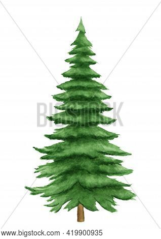 Fir Tree Watercolor Image. Hand Drawn Relistic Lush Pine Illustration Green Forest Plant Element. Ch