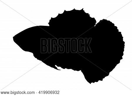 Black Silhouette Isolated Element On White Background, Hand-drawn Fighting Aquarium Fish. Work From