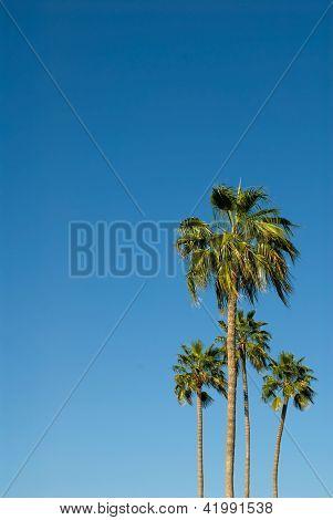 Palm Trees Against A Brilliant Blue Sky