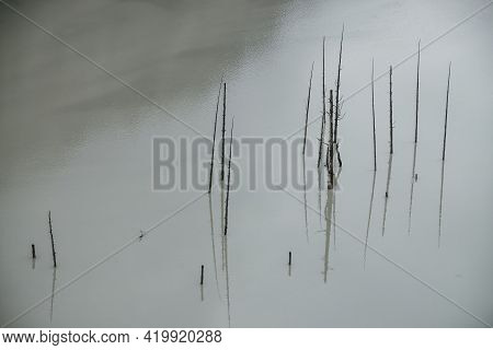 Atmospheric Nature Background With Group Of Tree Trunks In Lake Water Surface. Many Dead Trees In De