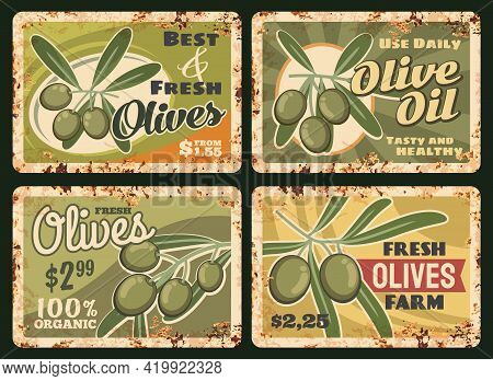 Organic Farm Olive Oil Rusty Metal Plate. Vector Bunch Of Ripe, Green Olives On Tree Branch With Lea