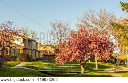 Cherry Blossom Trees In The Small Neighborhood Park, Aurora, Colorado