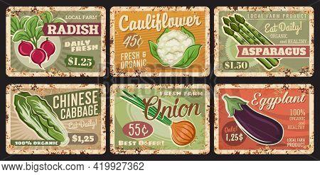 Vegetables Rusty Metal Plates, Vector Price Tags. Farm Veggies Organic Radish, Cauliflower, Asparagu