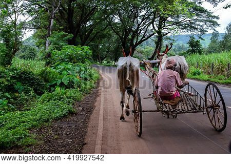 Stock Photo Of 50 To 60 Aged Old Indian Farmer Wearing Casual Cloths And Turban Riding Old Bull Cart