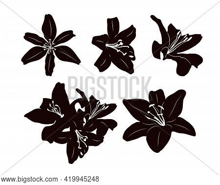 Stencils Of Individual Lily Flowers. Black Silhouette On White Background.