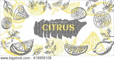 Lemon Frame Hand Drawn. Yellow Whole Lemons And Slices And Quarter And  Leaves Of Lemon Tree. Vector