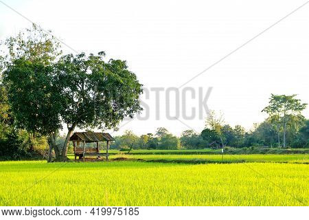 The Little Hut In The Rice Fields