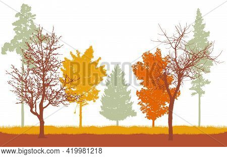 Autumn Woodland, Silhouette Of Bare Tree, Trees With Leaves And Spruce And Pine. Beautiful Nature, L