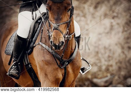 Equestrian Sport. Portrait Sports Brown Stallion In The Bridle. The Leg Of The Rider In The Stirrup,