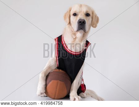 A Dog In A Basketball Uniform With A Ball Sits On A White Background. The Golden Retriever Participa